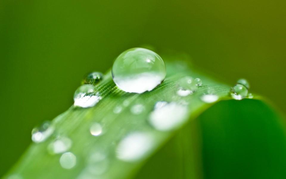 「樹葉上的水滴」的圖片搜尋結果