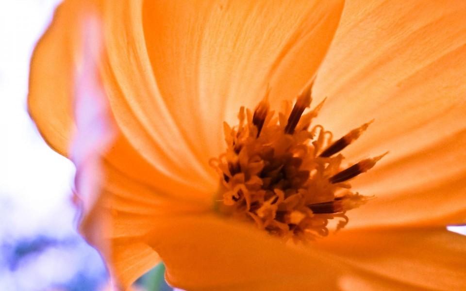 植物壁纸 小清新鲜花特写桌面壁纸下载   (10/13) 小箭头图标亲~快来