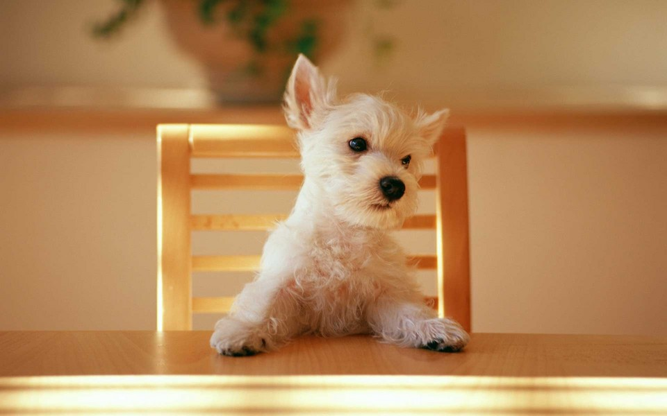 笔记本壁纸 动物壁纸 可爱小狗电脑桌面壁纸下载   (7/12) 小箭头图标