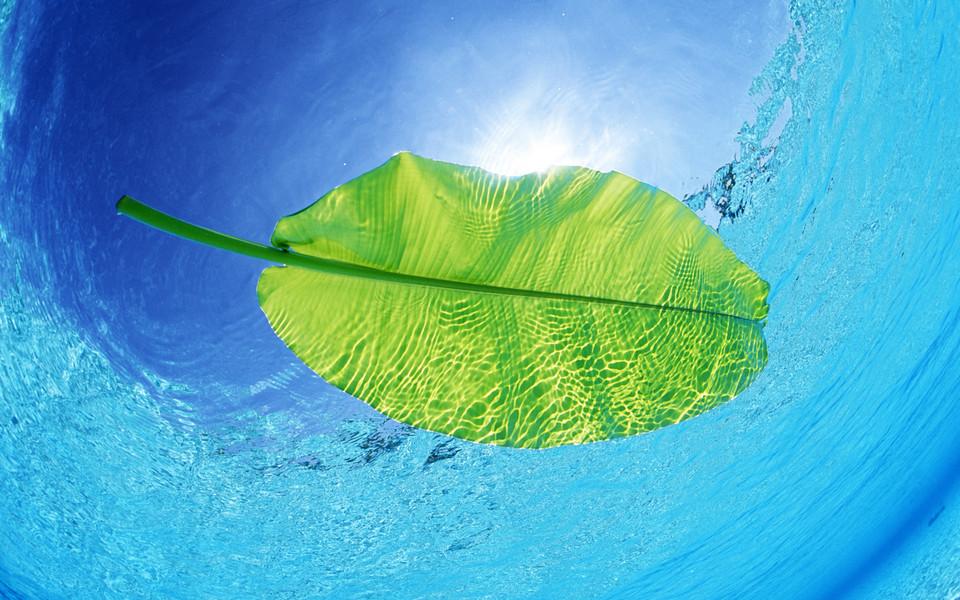 大海有什么动物和植物