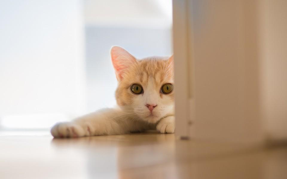 电脑壁纸 萌猫壁纸 可爱猫咪电脑桌面壁纸下载   壁纸下载: 1280x8001