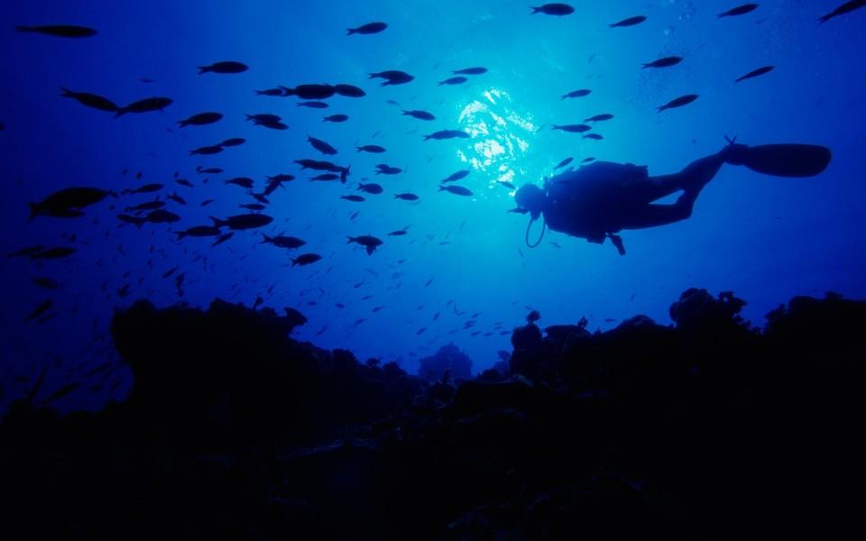 电脑壁纸 海底世界壁纸 海底世界高清护眼壁纸下载