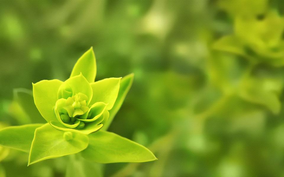 电脑壁纸 植物壁纸 绿色的植物桌面壁纸下载