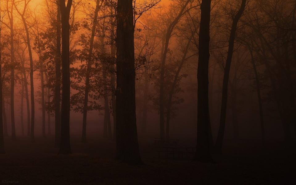 森林风光win 8主题宽屏壁纸