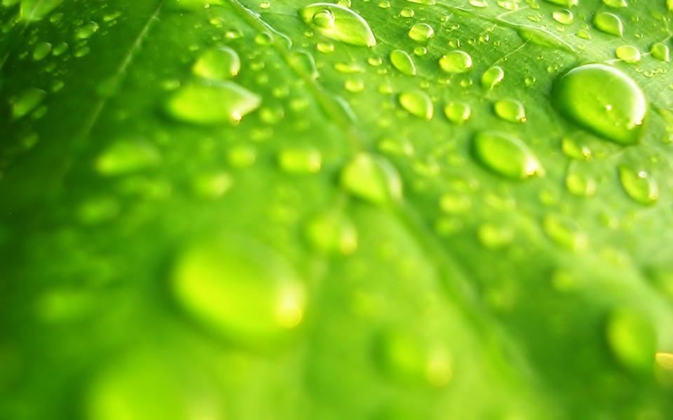 自然风景壁纸 绿色的植物清新高清壁纸下载   (10/12) 小箭头图标亲