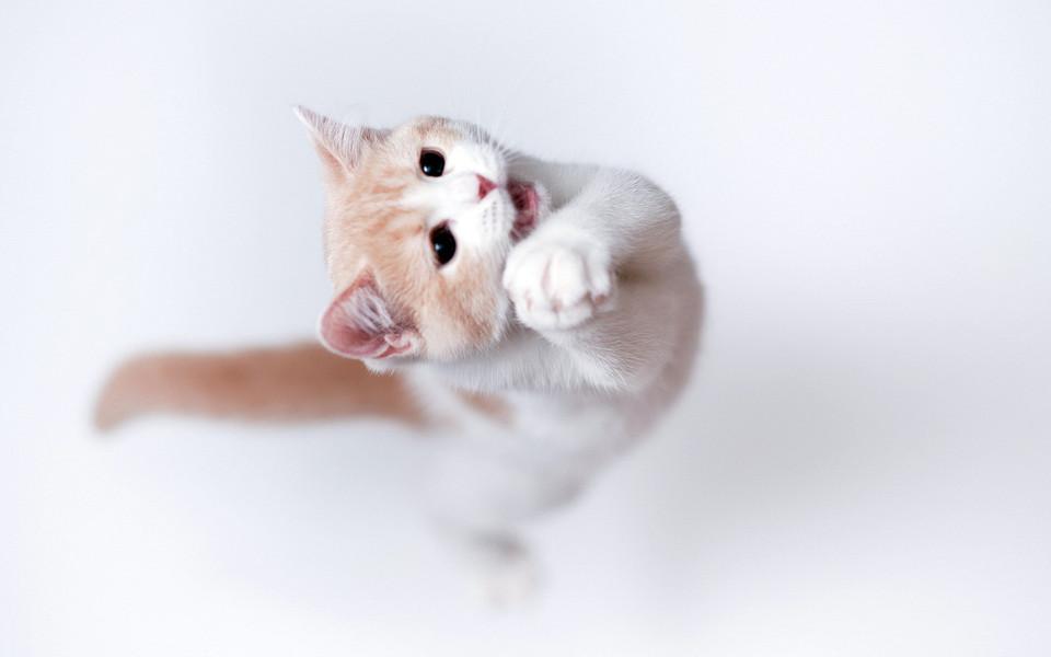 可爱的动物高清电脑壁纸