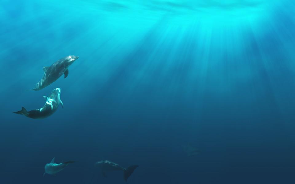 海底世界电脑壁纸高清