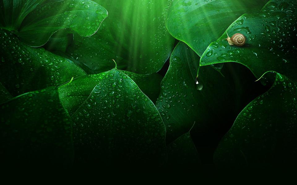 绿色的植物清新高清壁纸