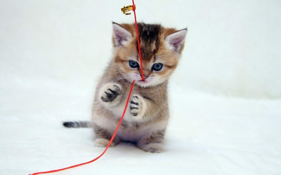笔记本壁纸 萌猫壁纸 可爱的猫咪电脑壁纸下载   (3/12) 小箭头图标亲