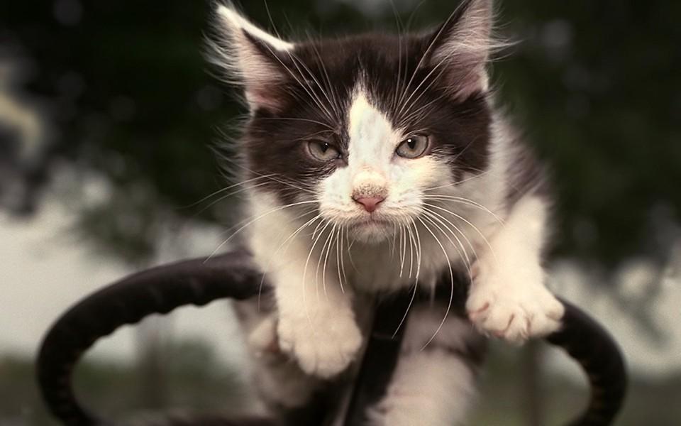 可爱的猫咪电脑壁纸