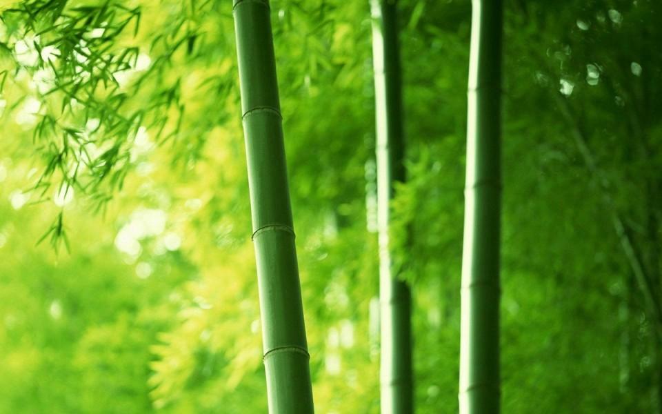 筆記本壁紙 自然風景壁紙 綠色主題護眼桌面壁紙下載