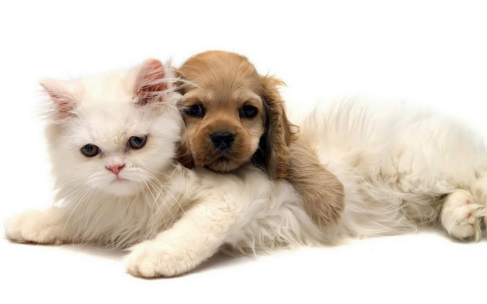 可爱动物高清桌面壁纸
