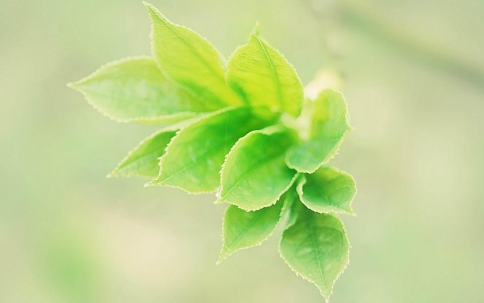 电脑壁纸 自然风景壁纸 绿色主题护眼桌面壁纸下载