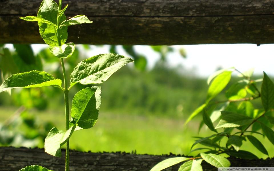 笔记本壁纸 自然风景壁纸 绿色主题护眼桌面壁纸下载