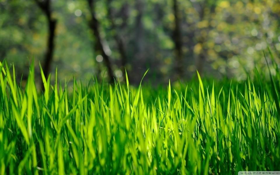 电脑壁纸 自然风景壁纸 绿色护眼主题高清壁纸下载