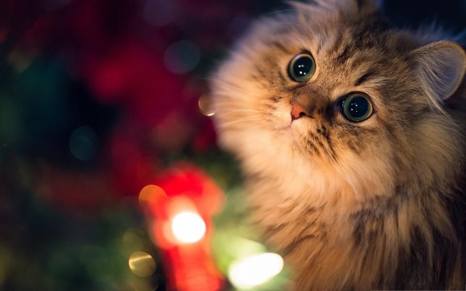 笔记本壁纸 萌猫壁纸 可爱猫咪壁纸桌面下载下载   (10/15) 小箭头