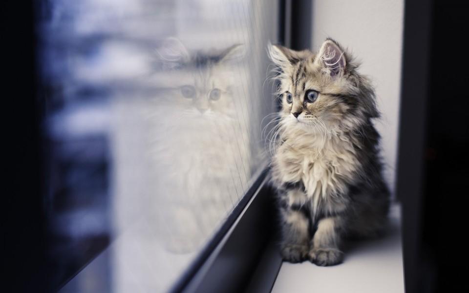 笔记本壁纸 萌猫壁纸 高清动物壁纸桌面下载下载