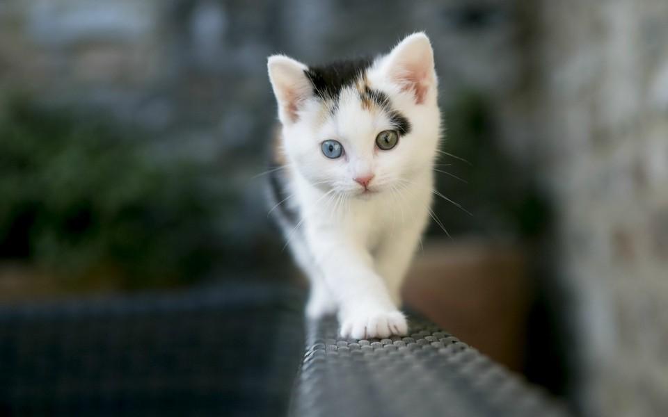 电脑壁纸 萌猫壁纸 可爱猫咪壁纸桌面下载下载
