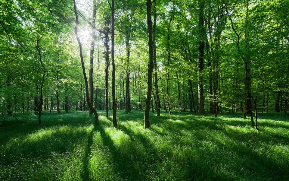 电脑壁纸 自然风景壁纸 丛林里的阳光桌面壁纸下载   (3/11) 小箭头图