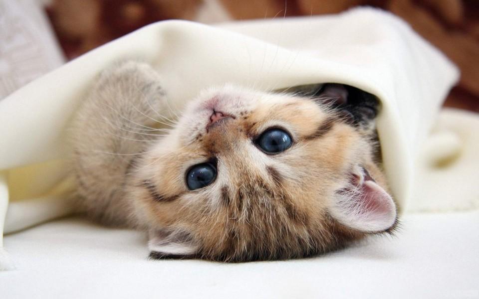 电脑壁纸 萌猫壁纸 可爱萌猫壁纸图片下载   壁纸下载: 上一组图 下一