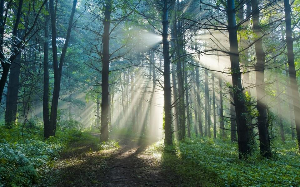 电脑壁纸 自然风景壁纸 丛林唯美景色电脑壁纸下载   (10/13) 小箭头