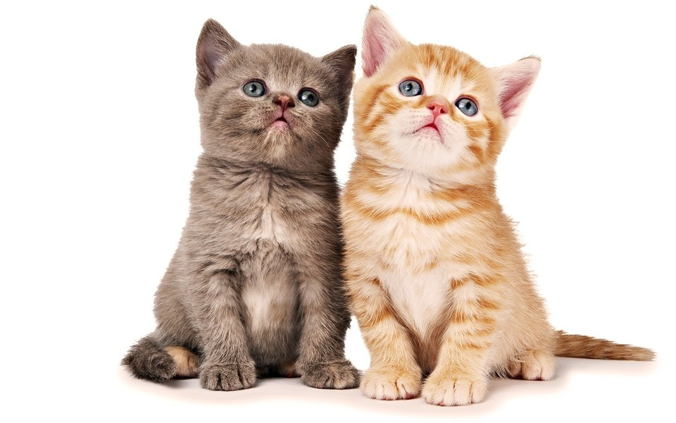 电脑壁纸 萌猫壁纸 可爱萌呆喵星人壁纸下载