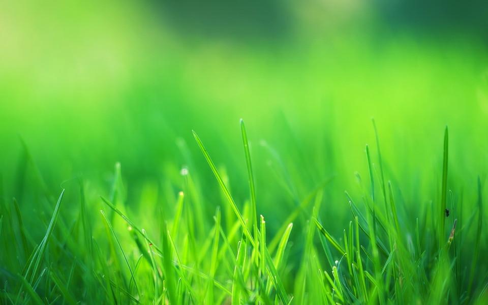 电脑壁纸 自然风景壁纸 绿色自然护眼壁纸桌面下载   (11/13) 小箭头