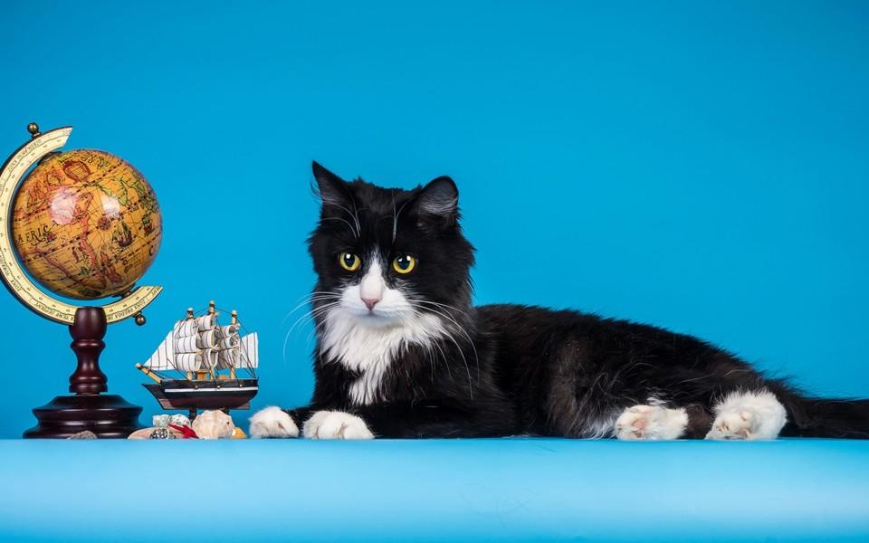 黑猫高清电脑壁纸