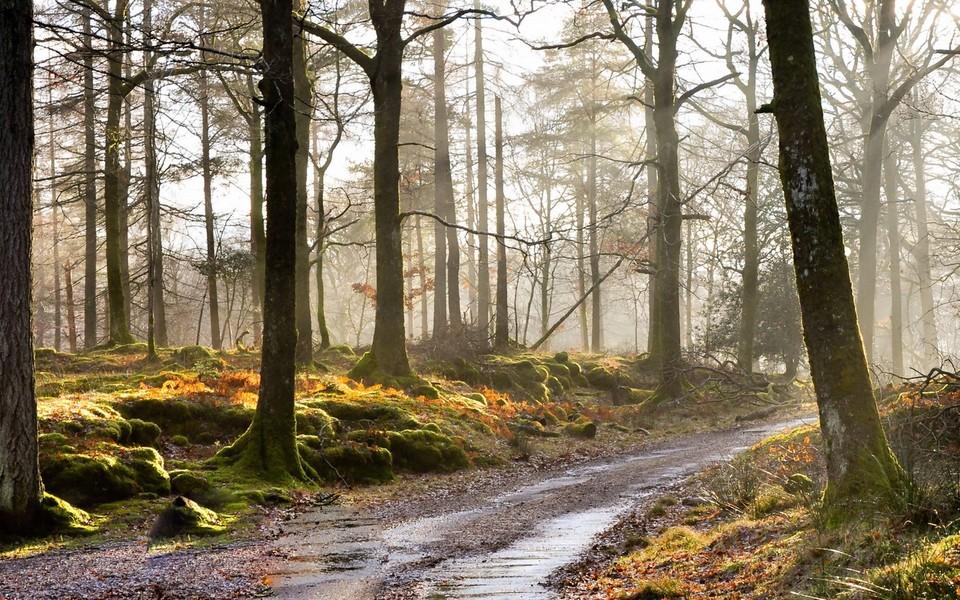 秋天的风景宽屏壁纸图片