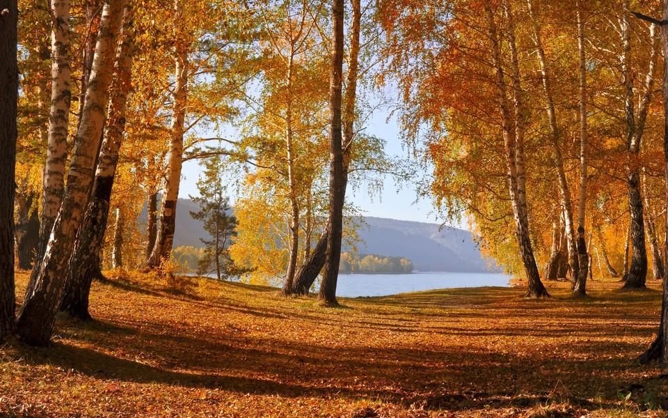 电脑壁纸 自然风景壁纸 森林美景电脑壁纸桌面下载