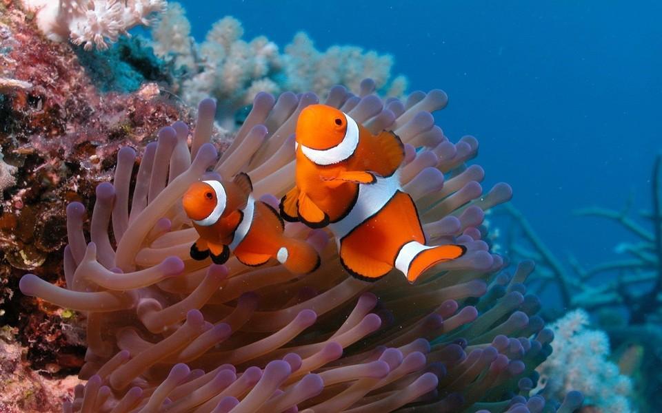 海底所有动物图片大全