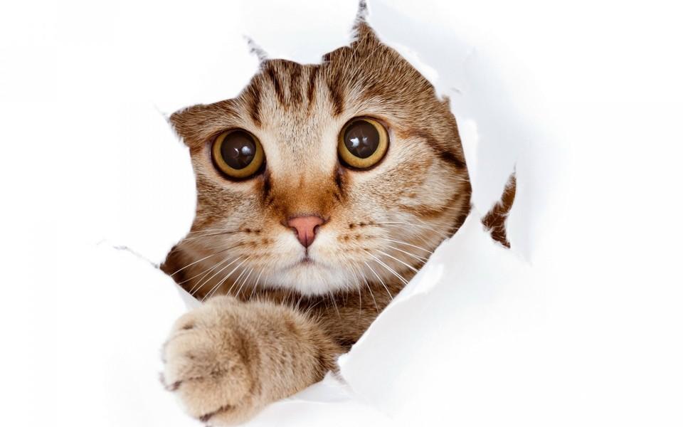 手绘萌猫印花白底
