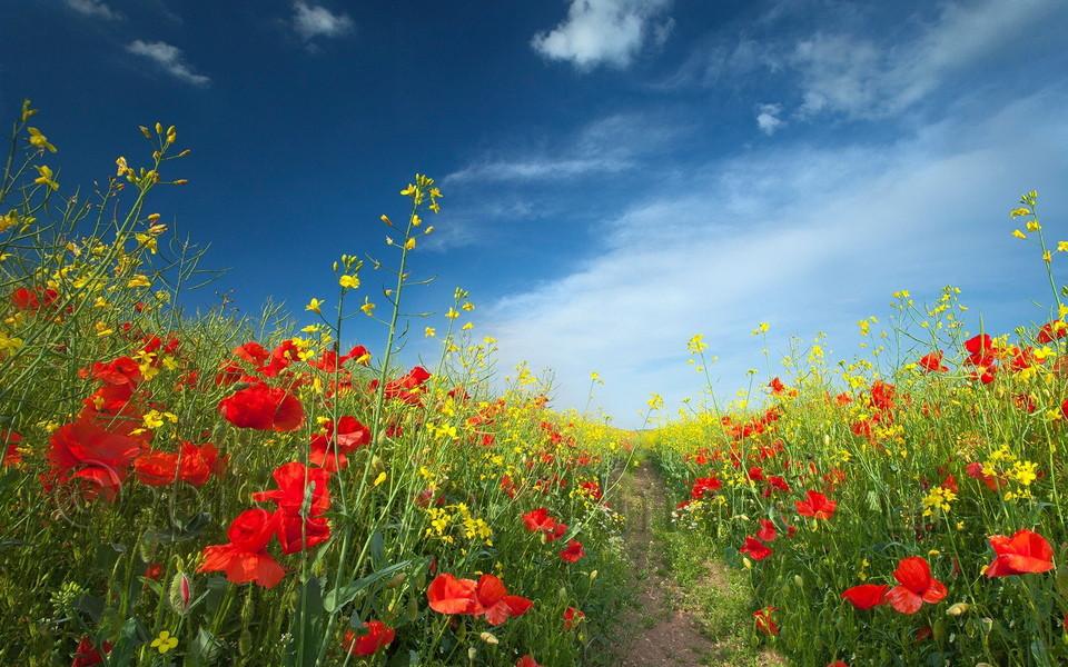 花海高清自然风景壁纸