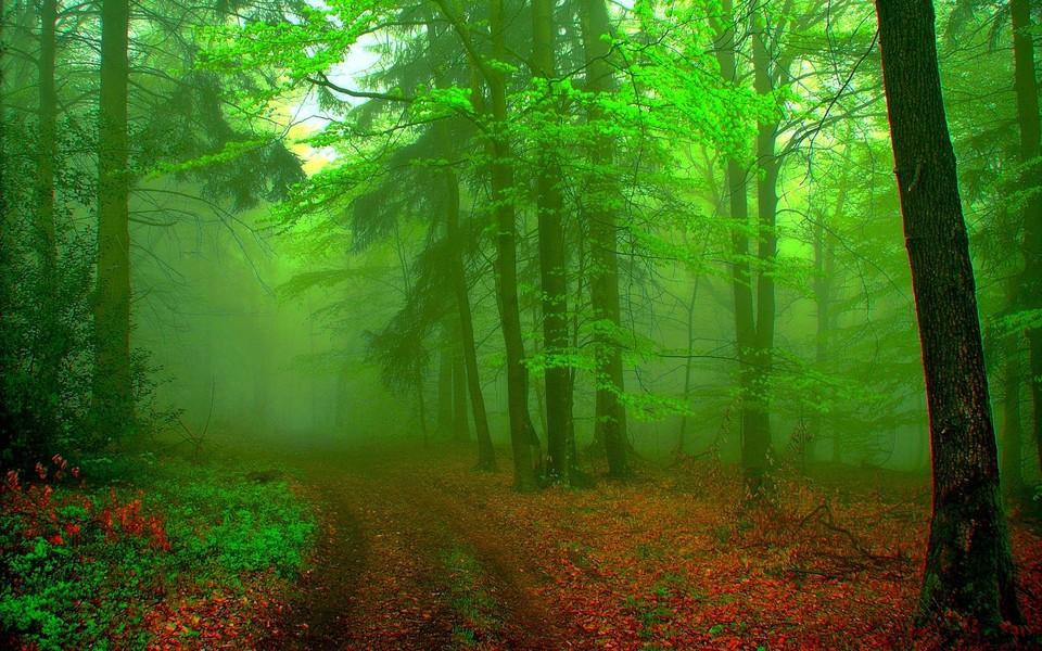 电脑壁纸 景色壁纸 绿色护眼壁纸下载下载