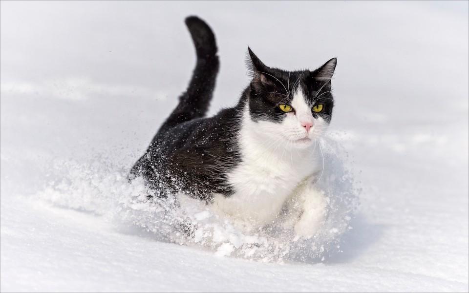 黑猫高清动物壁纸下载