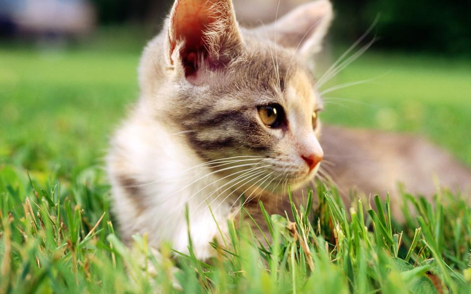 可爱猫咪壁纸桌面