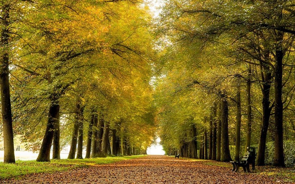 电脑壁纸 自然风景壁纸 林荫大道自然景色壁纸下载   (2/9) 小箭头