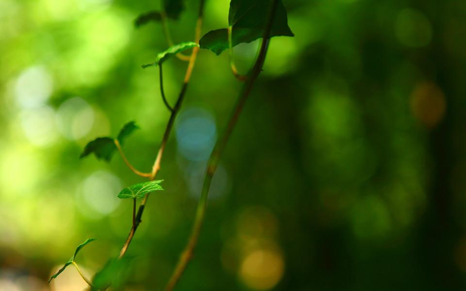 绿色护眼壁纸高清全屏 第2页-zol桌面壁纸