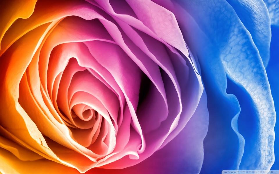 电脑背景玫瑰花-爱情玫瑰桌面壁纸图片