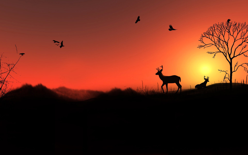 电脑壁纸 动物壁纸 高清麋鹿动物壁纸桌面下载