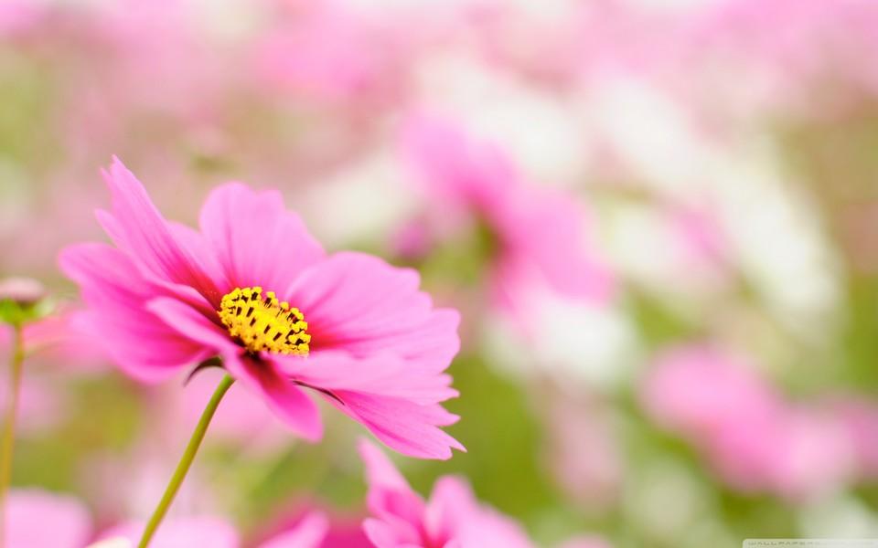 春天的植物唯美壁纸