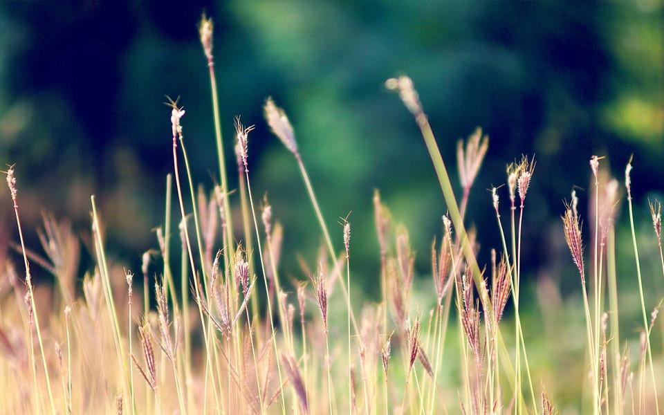笔记本壁纸 植物壁纸 盛夏小清新植物桌面壁纸下载   (13/14) 小箭头