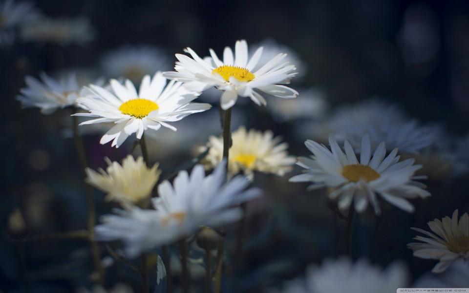 笔记本壁纸 自然风景壁纸 唯美花卉意境壁纸下载