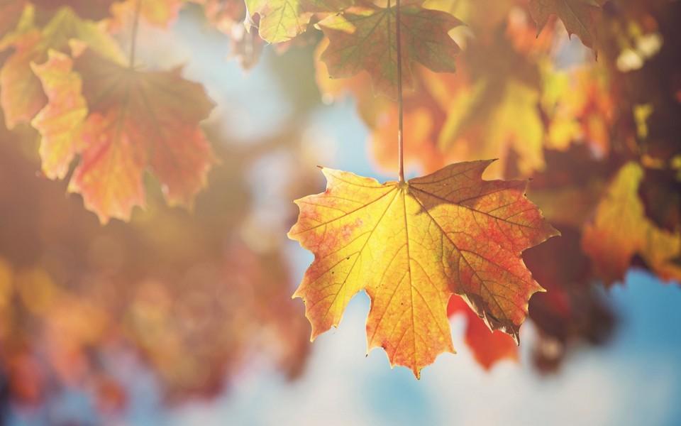 电脑壁纸 自然风景壁纸 秋天简约唯美图片下载   壁纸下载: 上一组图
