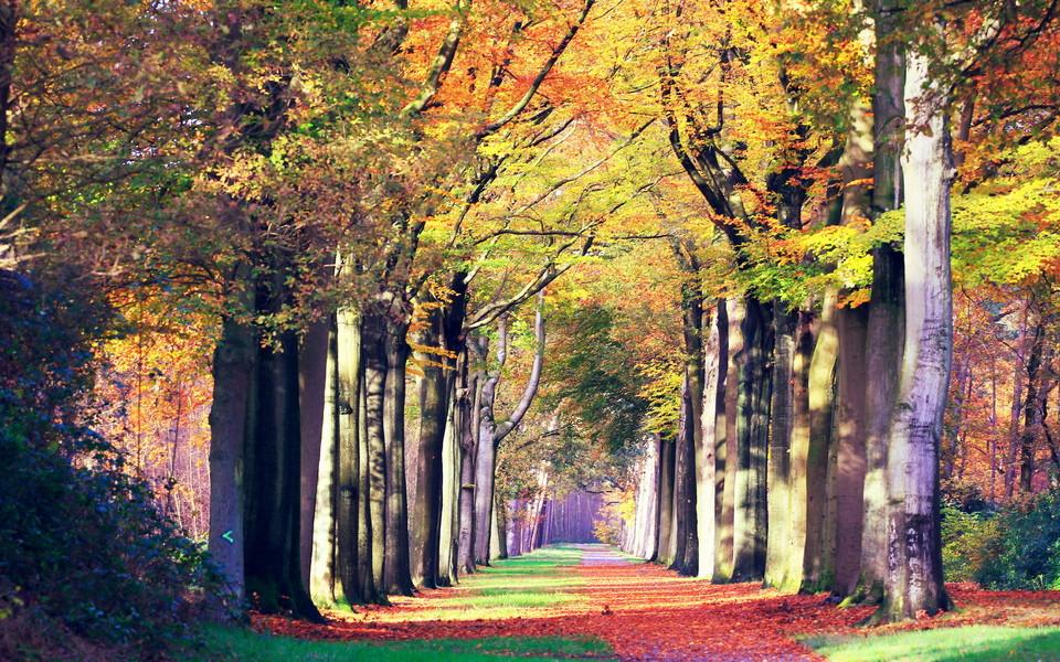 电脑壁纸 自然风景壁纸 秋意盎然自然唯美景色下载   (12/12) 小箭头