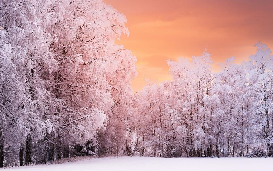 电脑壁纸 雪景壁纸 雪中的大树高清桌面壁纸下载