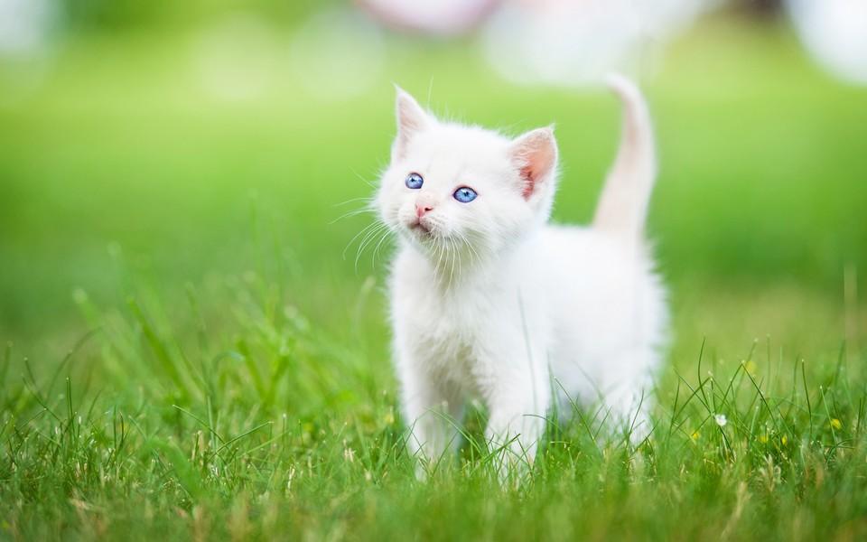 可爱萌猫桌面壁纸图集