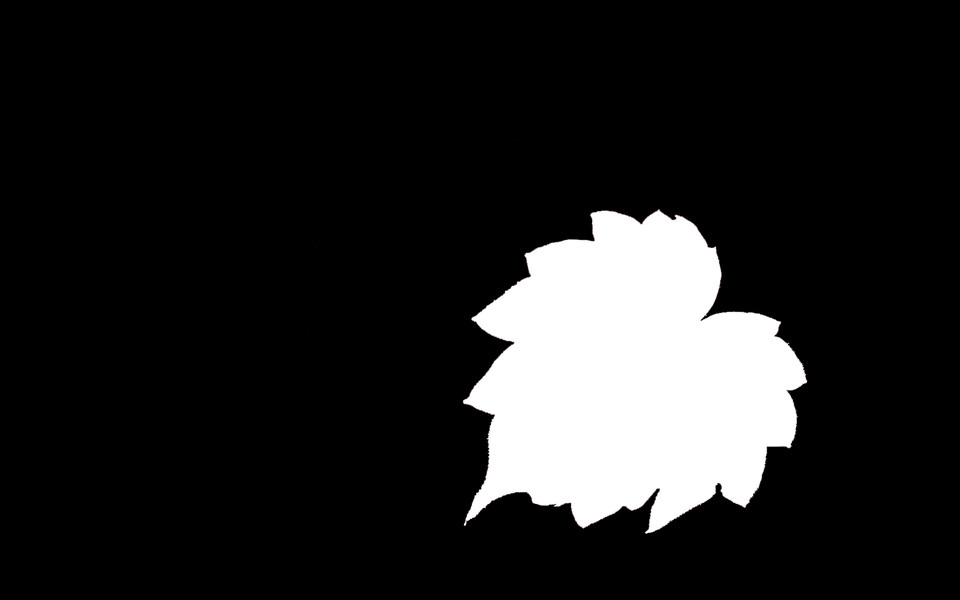 枫叶剪影桌面壁纸