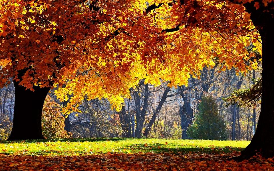 秋天唯美的景色电脑壁纸