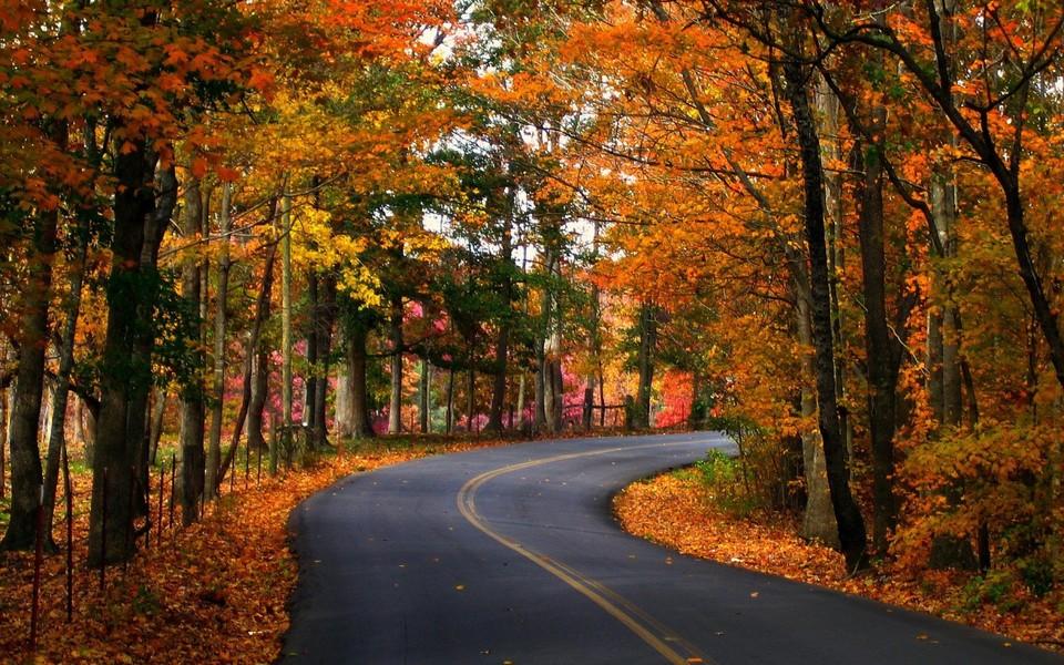 秋季风景壁纸1440x900